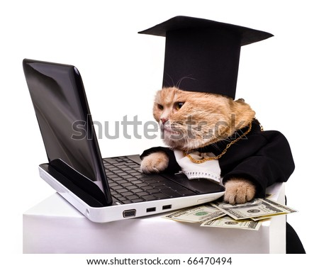 intelligent cat for the laptop.Animal in the academic robes on a white background.year  cat.financial success