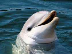 is this bottle nose dolphin really smiling