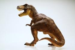 Isolated dinosaur on white background