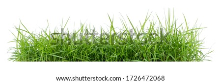 Photo of   Isolated green grass on a white background