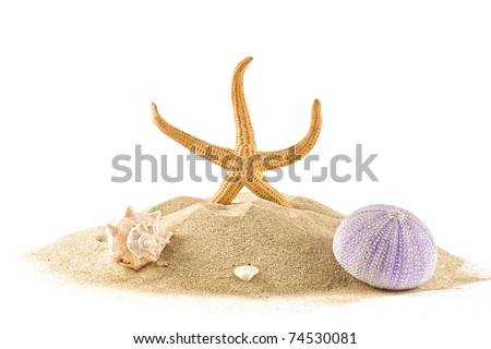 ,isolated marine star,sea urchin and seashell on white,