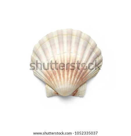 Isolated shells with white Background.