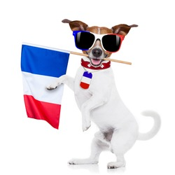 jack russell dog with  football  and  french flag, isolated on white background