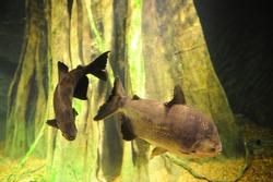 18 January 2015. Istanbul, Turkey. Istanbul aquarium.