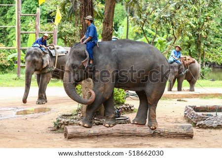 8 June 2016. : Tourist Thailand,Activities elephant bathing Thailand Elephant Conservation Center in Lampang Province Hang Chat district for tourists to come close to the Thai elephant. #518662030