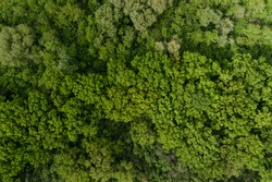 4K aerial drone shoot. Flying over a beautiful green forest in a rural landscape. Top view of trees in forest background. Empty field. Drone photography. Forest river, rural road.