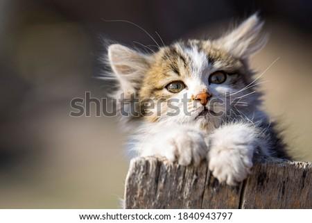 küçük sevimli kedi anlık görüntü Stok fotoğraf ©