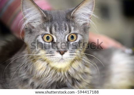 kitten at the cat show #594417188