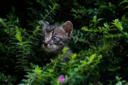Kitten peeking out from bushes