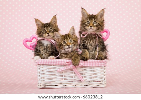 3 Kittens in basket with pink bows and Valentine hearts - stock photo