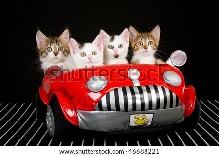 4 kittens in soft toy red car on black background