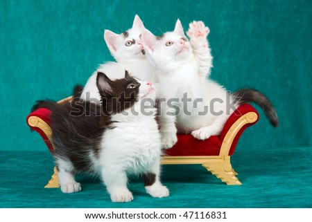 3 Kittens on miniature Victorian couch on green background