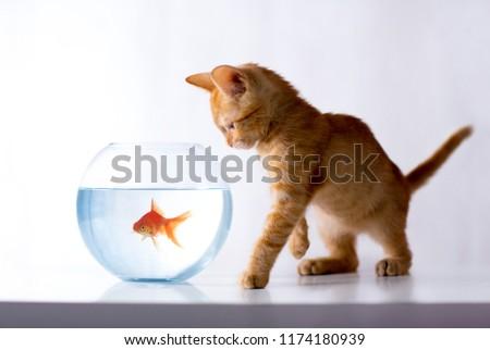 Kitty Observers
