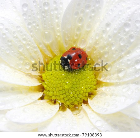 ladybug #79108393
