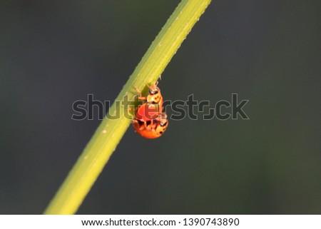 Ladybug in the park garden #1390743890