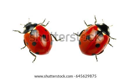 Photo of  Ladybug isolated on white background