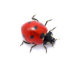 Ladybug on white
