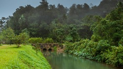 landscape of fog in evergreen jungle forest after rain. Natural misty.forest after rain stone Stone Arch Bridge Across Lake background.
