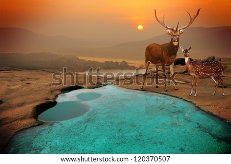 landscape with sundown and deer.