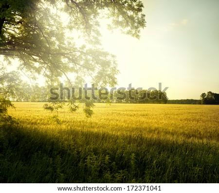 landscape with tree on the field  - Shutterstock ID 172371041
