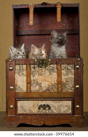 3 LaPerm kittens hiding in vintage luggage trunk