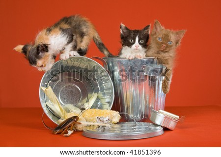 3 LaPerm kittens with garbage cans on orange background