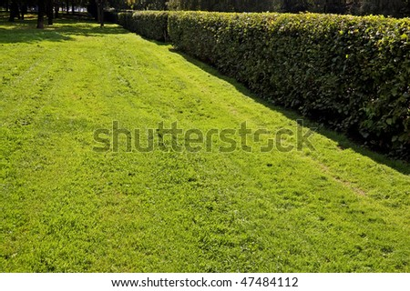 Lawn in city square