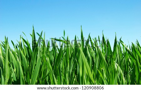lawn isolated on sky