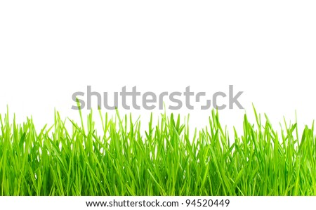lawn isolated on white