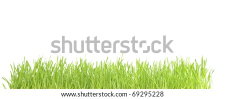 lawn isolated on white background