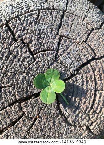 4 Leaf Clover  4-leaf clover in nature #1413619349