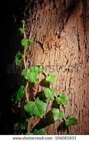 Leaf of ivy. Symbol of spring and ecology concept.