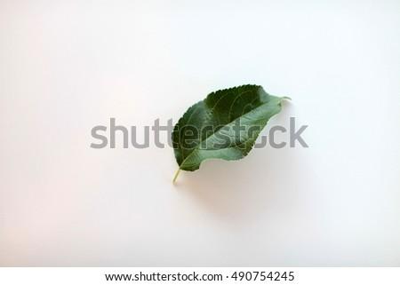 leaves #490754245