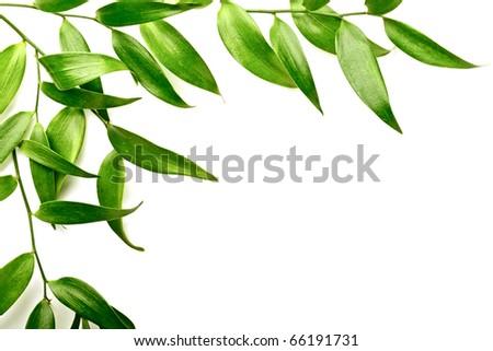 leaves frame on the white background #66191731