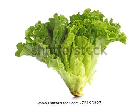lettuce leaves on white