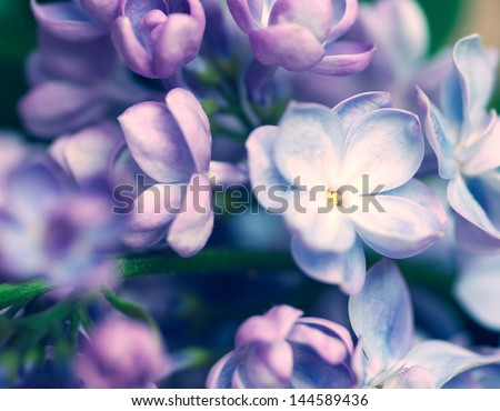 lilac flowers background #144589436