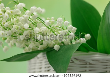 Lily-of-the-valley basket, close up - stock photo
