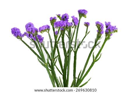Free photos statice flowers avopix limonium sinuatum statice salem flower isolated on white background 269630810 mightylinksfo