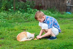 little boy  feeds homeless cat  in a garden
