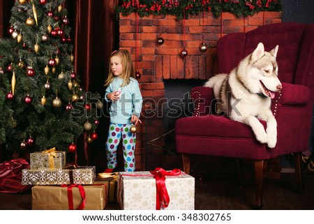 little girl and siberian husky dog playing with presents in christmas decorations 348302765