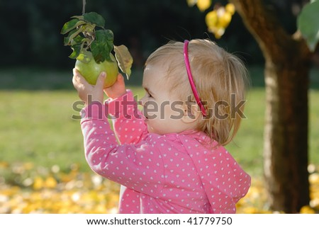 little girl picking red apple in orchard