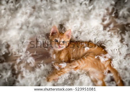 Shutterstock Little kitten playing with  feathers