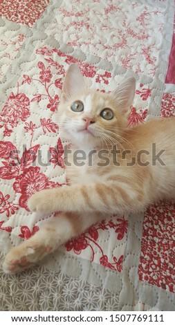 Little sweet cat on the bed Stok fotoğraf ©