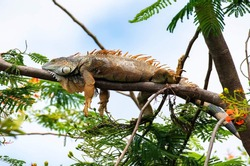 Lizards are cold-blooded reptiles that have long tails and four legs.Lizards exist in varies sizes, colours and shapes. Lizards have a slimy appearance, but they are actually dry.