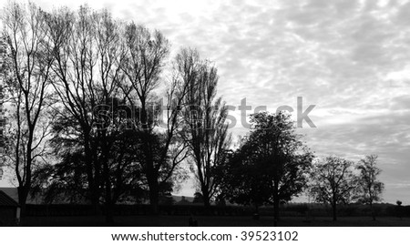 Lonely and dark scene of trees against the sky in black and white