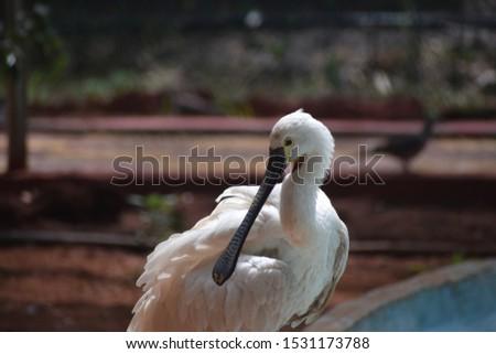 Long beak Stork at pound in zoo