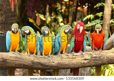 Stock Photo   macaw bird sitting on the perch