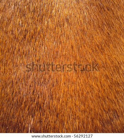 macro of a teckel's fur