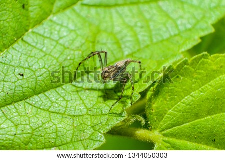 Macro pictures of small spiders on green leaves