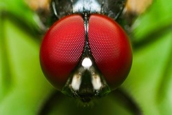 Macro Shot on fly in garden